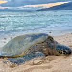 turtles_on_our_beach